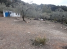 olive trees and garage
